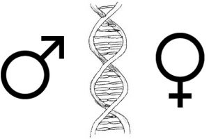 Gender Differences and the Biology of Leadership